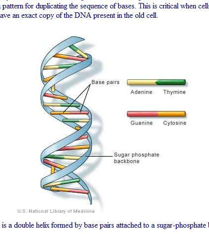 page - dna image