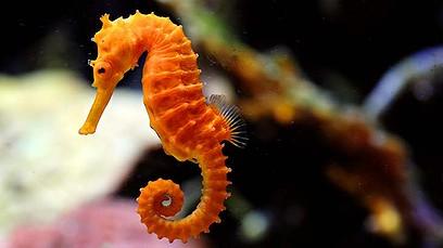 seahorse sandy hook hippocampus
